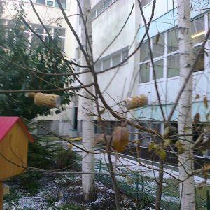 Хранилки за птички в двора на училището, изработени от сръчковците от І Г клас